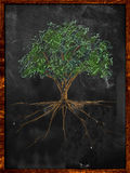 Tree Sketch color leaves and root on blackboard. Drawing Royalty Free Stock Image