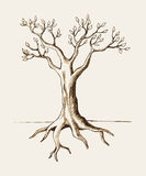 Tree. Sketch illustration of a tree Royalty Free Stock Photo