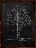 Tree Sketch with leaves on blackboard. Drawing Royalty Free Stock Images
