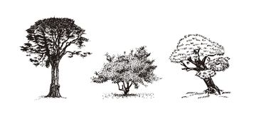 Three trees vector illustration. Stock Image