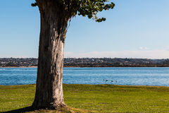 Tree at Ski Beach Park in San Diego. California with Mission Bay in the background Royalty Free Stock Photos