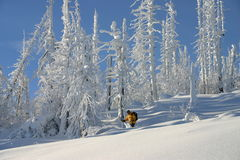 Tree Skiing 2 stock photo