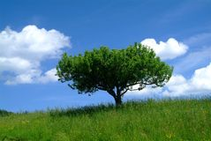 Tree and sky. Green tree and blue sky royalty free stock images