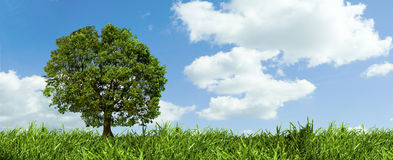 Tree and The Sky royalty free stock images