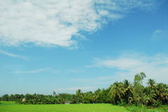 Tree sky. Blue sky cloud tree green Stock Photo