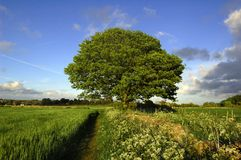 Tree and Sky Royalty Free Stock Images