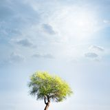 Tree and sky. Lonely green tree against a beautiful sky with clouds and sun Royalty Free Stock Photography