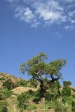Tree and sky. Tree and mediterranean vegetation with a blue sky Stock Photo