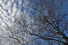 Tree and sky. Tree against blue sky Royalty Free Stock Photos