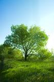 Tree and sky Royalty Free Stock Photo