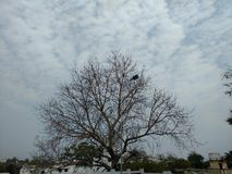 Tree. And sky amazing pic real Royalty Free Stock Photo