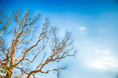 Tree and sky. Beautiful natural atmosphere between sky and tree Stock Photography