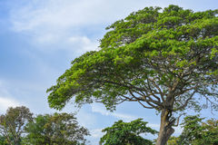 Tree and sky. A tree and blue sky Royalty Free Stock Photos