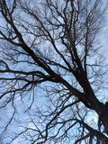 Tree in the sky. Tree sky blue branch spring royalty free stock images