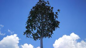tree in the sky stock photo