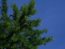 tree & sky stock photography