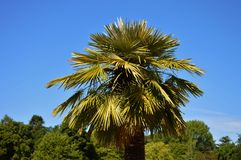 Tree, Sky, Borassus Flabellifer, Vegetation