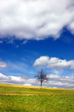 Tree and sky with clouds Stock Photography