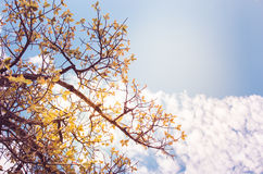 Tree and sky in countryside Stock Photography