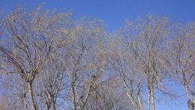 Beautiful Tree and Blue Sky. Sky and tree in details Royalty Free Stock Photos