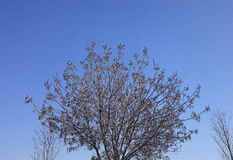 Beautiful Tree and Blue Sky. Sky and tree in details Stock Photography