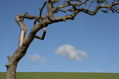 Tree sky and field. Stock Images