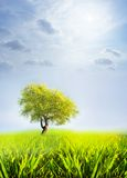 Tree and sky. Tree in a field of grass on a sky background Royalty Free Stock Image