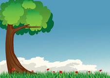 Tree and sky. Tree with grass and red poppies Stock Photos