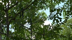 Tree and sky stock footage