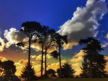 Landscapes in New Zealand. Tree and sky landscapes in New Zealand Stock Photo
