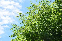 Tree, Sky, Leaf, Branch Royalty Free Stock Images