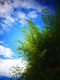 Tree and sky in Malaysia. This photo was taken in Balik Pulau, Penang, Malaysia Royalty Free Stock Photos