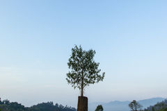 Tree with sky Stock Image