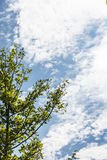 Tree and sky royalty free stock photo
