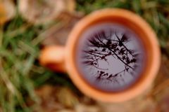 Tree and sky reflection point focus in black tea in orange cup against unfocused green grass and yellow leaves background. Autumn concept Royalty Free Stock Photos