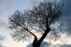 Tree and Sky Stock Photography