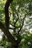 Tree in the sky Stock Photos