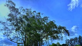 Tree and sky. stock photography