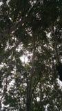 Tree sky Royalty Free Stock Image