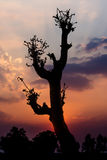 Tree and twilight Stock Photos