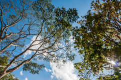 Tree and sky. View from the ground to the sky Stock Photo