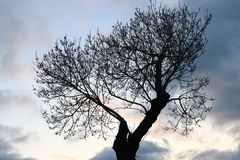 Tree and Sky Royalty Free Stock Image