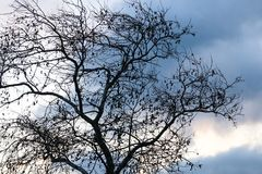 Tree and Sky. A woody perennial plant, typically having a single stem or trunk growing to a considerable height and bearing lateral branches at some distance Stock Photo