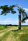 Tree, Sky, Woody Plant, Vegetation royalty free stock photos