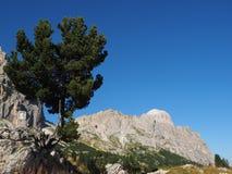 Tree, Sky, Woody Plant, Vegetation royalty free stock image