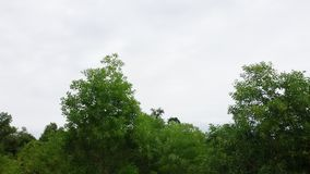 Tree skyline Royalty Free Stock Images