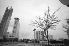 The tree and skyscape with building in black and white color ban royalty free stock photo