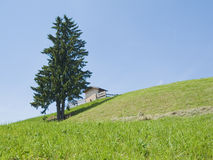 Tree on a slant meadow Royalty Free Stock Photography