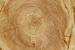 Tree slice Stock Images