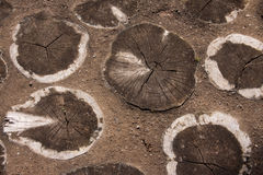 Tree slices embedded in a path stock photography